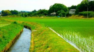 糸島農業奮闘記(休耕地を草刈り・草焼きから始める)