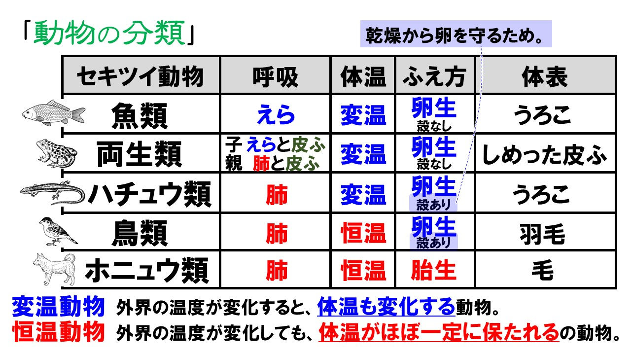 動物の分類表