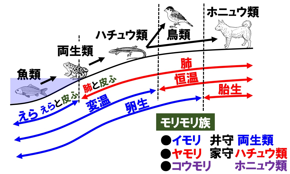 進化と動物の分類