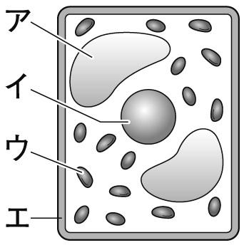 細胞のつくり 問題