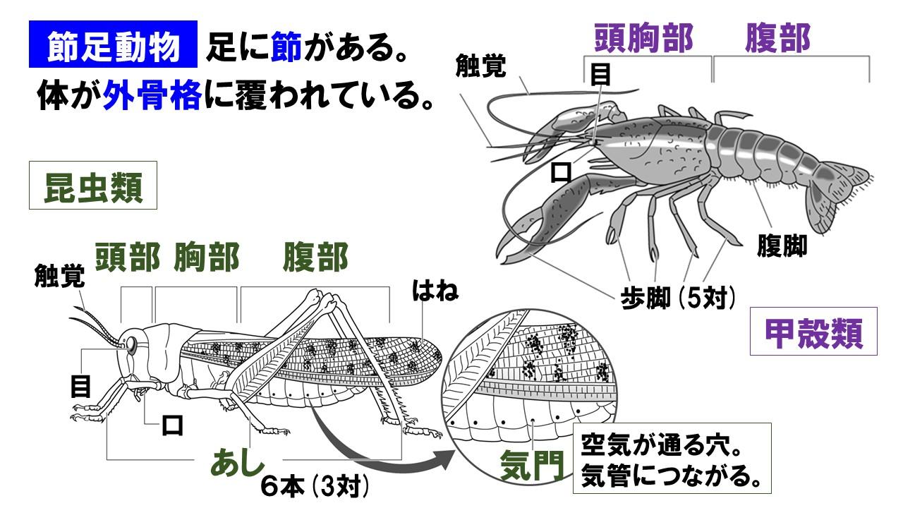 動物 特徴 軟体