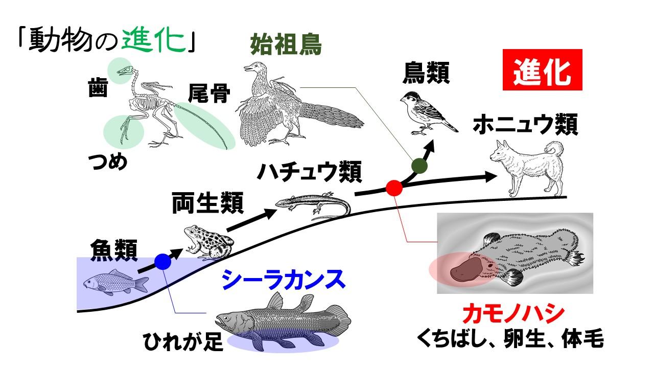 動物の進化