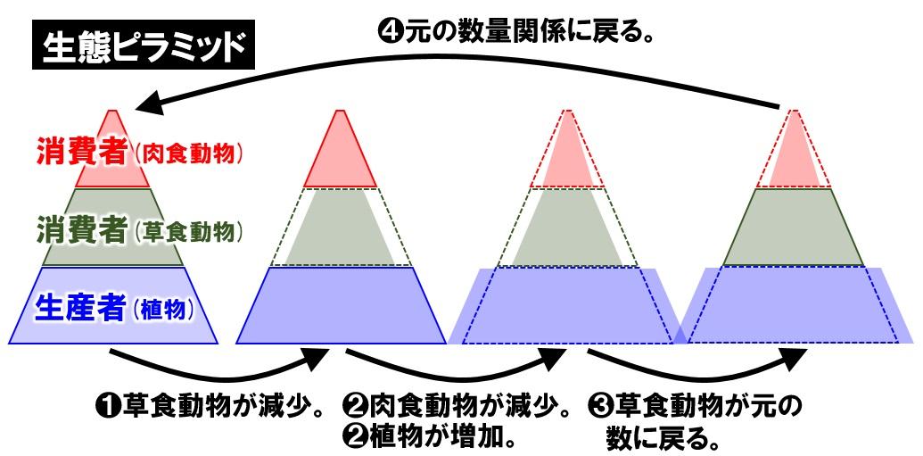 生態ピラミッド