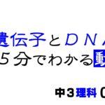 中3理科「遺伝子とDNA」染色体と遺伝子とDNAの違い