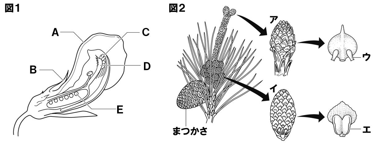植物のつくり1