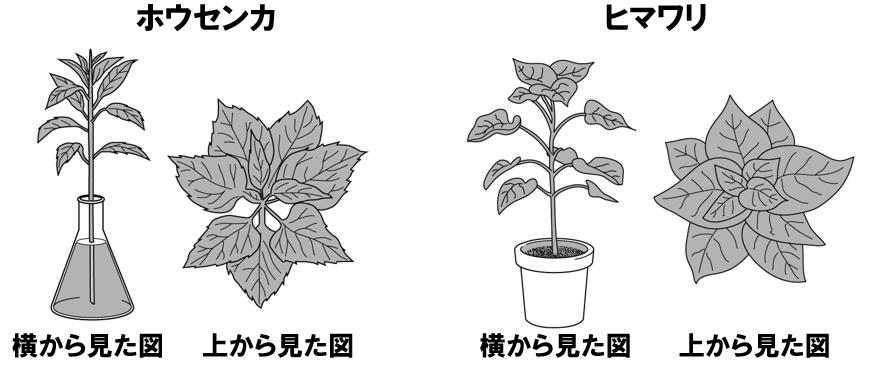葉のつき方